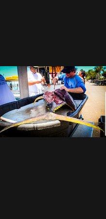 Start Me Up, Sport Fishing Image