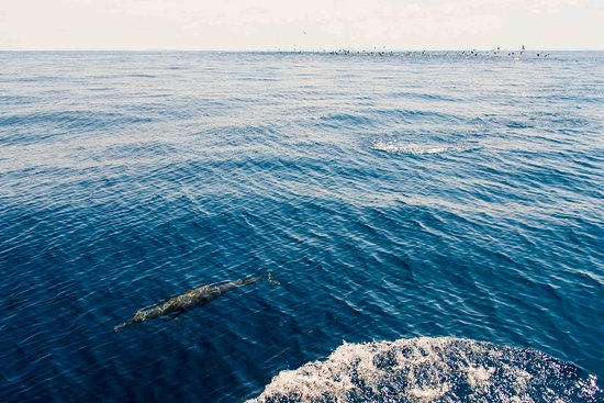 Fish Drake Bay - Reel Escape: behind the boat