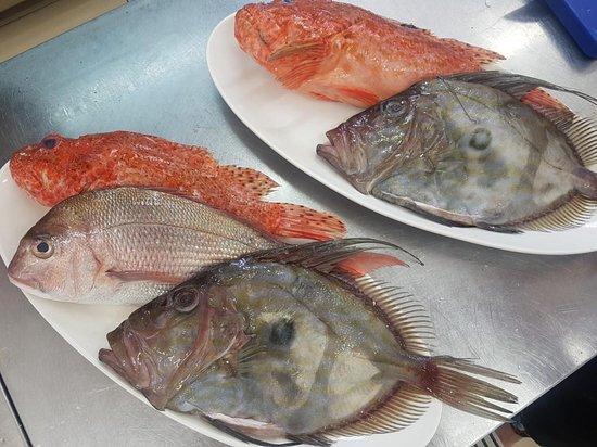 Preko, Croacia: First class adriatic fish