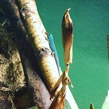 Discover Amazonia: photo4.jpg