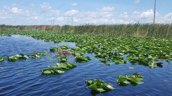 Everglades Airboat Tour & Gator Boys Alligator Rescue Show: Everglades