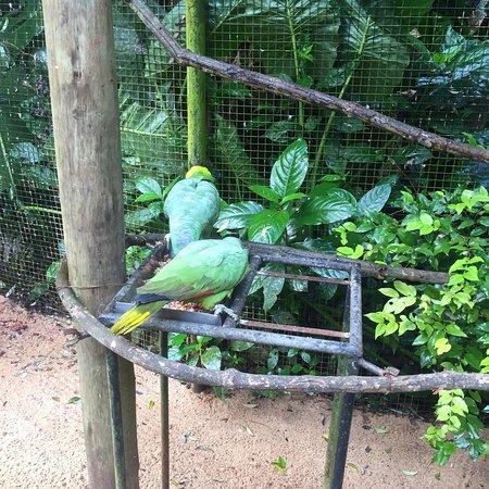 Parque das Aves照片