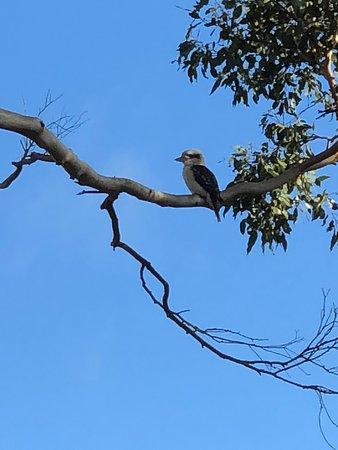 Rhyll, Australia: Lots of local bird life