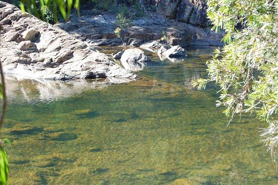 Alligator Falls Track照片