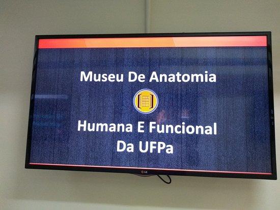 UFPA Museu de Anatomia Humana e Funcional
