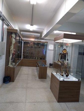 UFPA Museu de Anatomia Humana e Funcional: Vista parcial da exposição