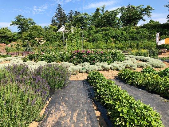 Okitama Park Herb Garden