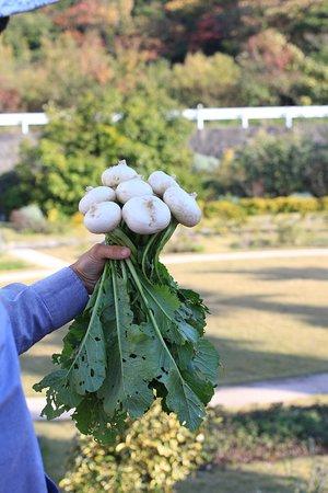 Umi no Restaurant: Strains were grown in our field.