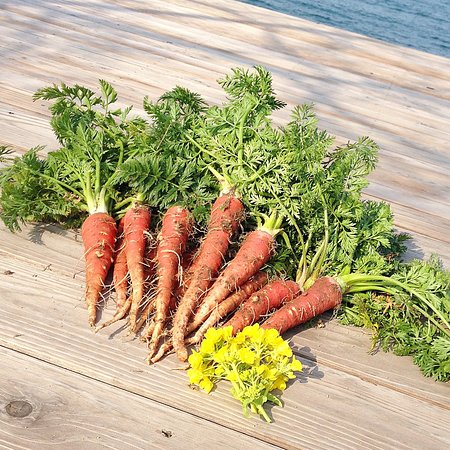 Umi no Restaurant: Carrot were grown in our field.