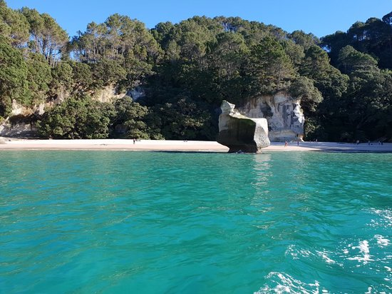 Glass Bottom Boat Whitianga: 20180704_140527_large.jpg