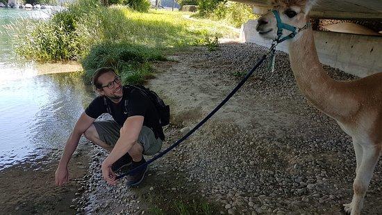 Alpaka Trekking on the Mountain: kurze Pause