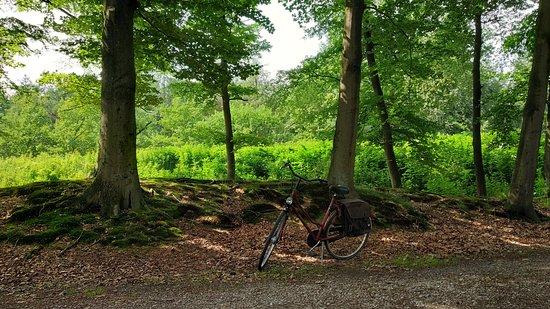 RCN het Grote Bos: Road