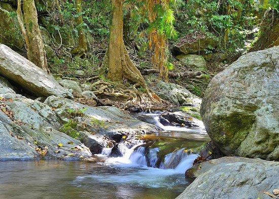 Stoney Creek Trail: Stoney Creek has many small rapids