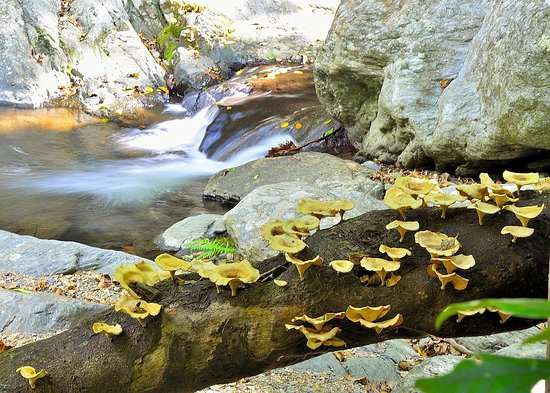 Stoney Creek Trail: Wild fungus and mushrooms thrive in the humid and wet Stoney Creek gorge