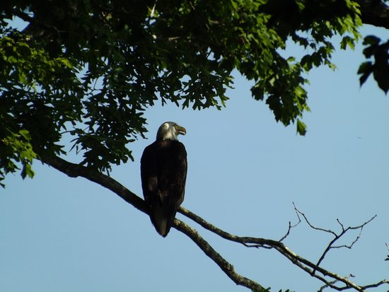 Dover, TN: Fort Donelson Eagle
