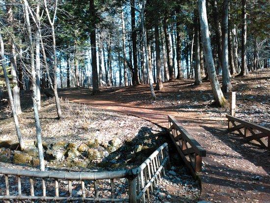 Yamanakako Bungaku no Mori Park: 山中湖 文学の森公園