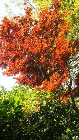 Odawara Kokian: 季節はずれの紅葉