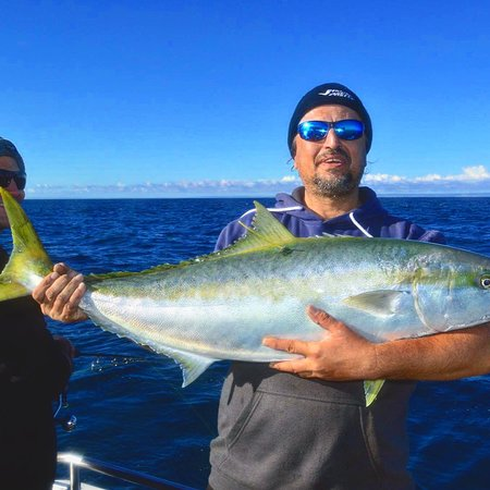 Marion Bay, Ausztrália: Kingfish caught one a 3 day Charter