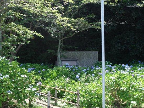 Ajisai Park照片