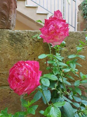 Park Residence Cicladi: Blumen im Garten
