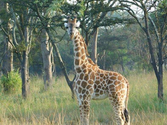 Mbarara, Uganda: one day I'll be taller than the tree