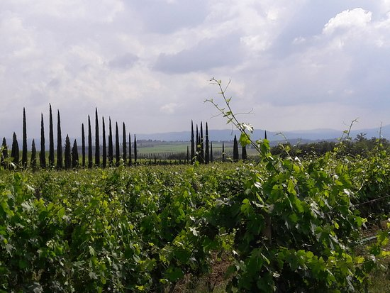 Montalcino, Włochy: There are never too many cypress trees in a photo