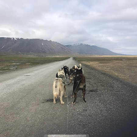 Green Dog Svalbard: photo1.jpg
