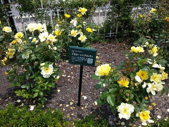 Rose Park照片
