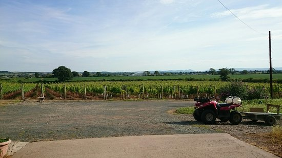 Телфорд, UK: Family vineyard in the heart of Shropshire