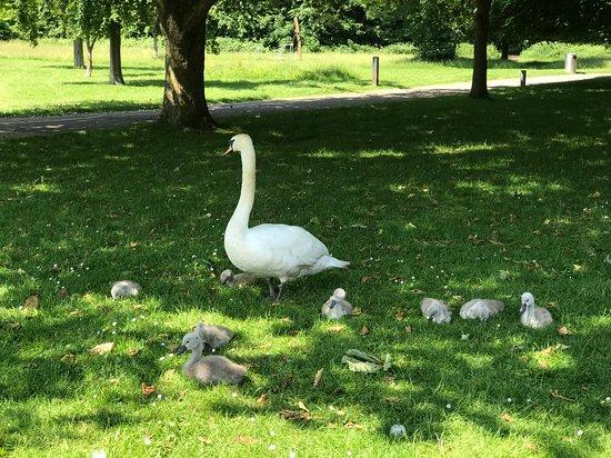 Tudor Grange Park: summer