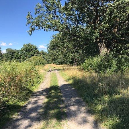 Gavurky: Protected oak park