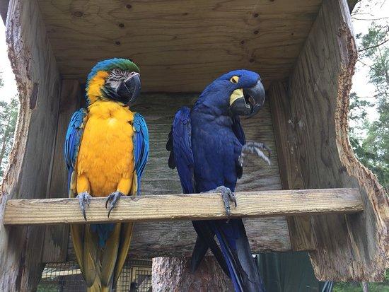 Lomamäki Petting Zoo