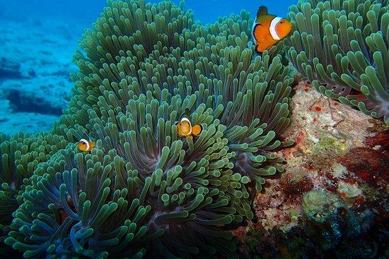 India Scuba Explorers: dive session
