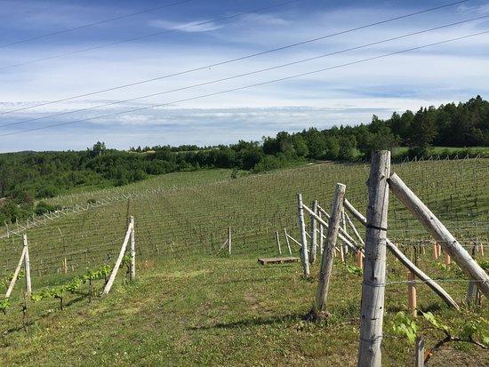 Saint-Ulric, Canada: Coteau vignoble