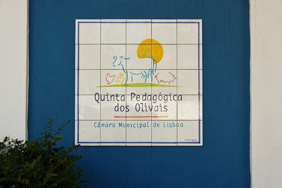 Quinta Pedagogica dos Olivais: Quinta entrada