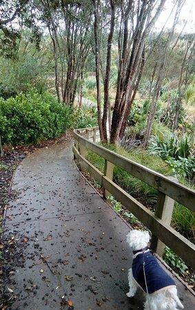 Helensville, Nueva Zelanda: Walkway through native planting