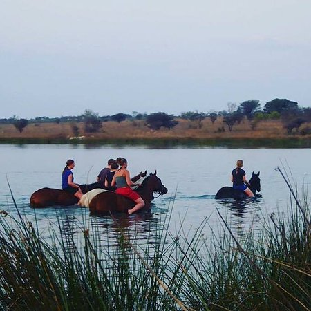Gweru, Zimbabwe: Swimming with horses