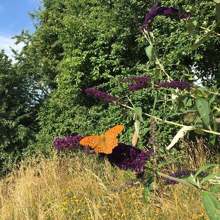 Prachtige vlinderboom bij het pension