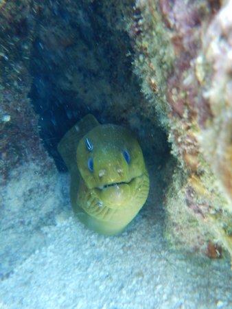 White Sands Dive Shop照片