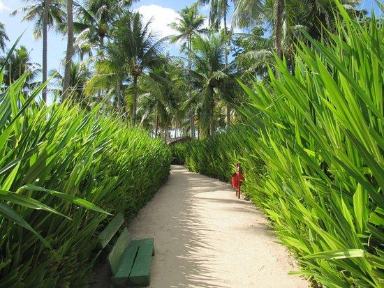 Bora Bora O Paraiso E Aqui: entrada, vindo do estacionamento.