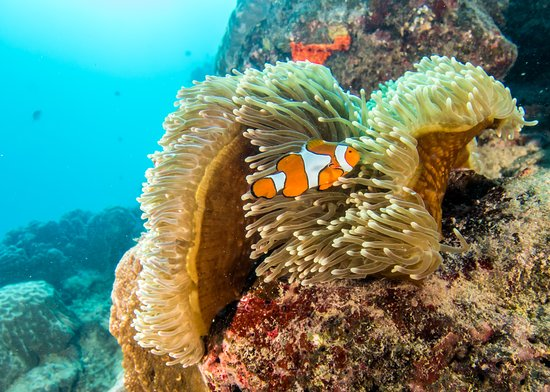"Reef Experience: Of course 'Nemo"" was found everywhere."