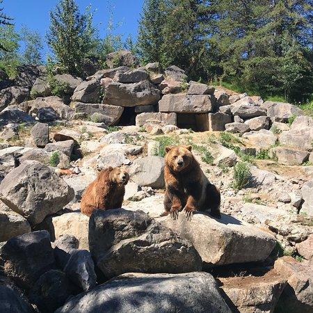 Foto de Zoo Sauvage de Saint-Felicien