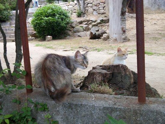 Miharashitei照片
