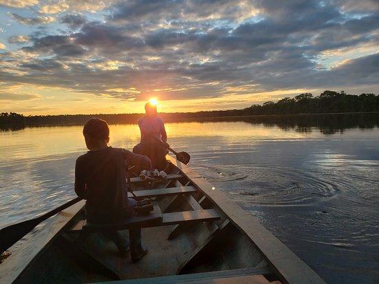 JunglePro: sunset