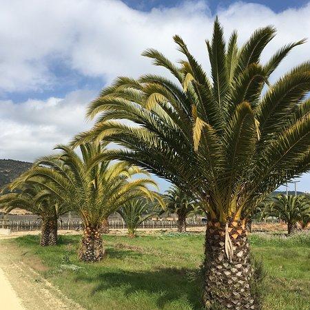 Ruta Del Vino Valle De Colchagua afbeelding