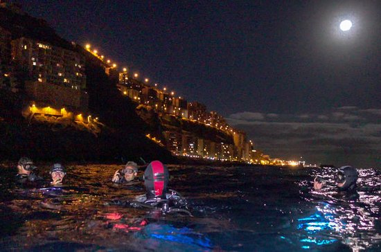 Scuba night dive on Tenerife with ...