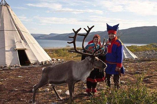 Visit a Sami Reindeer Farm in the...