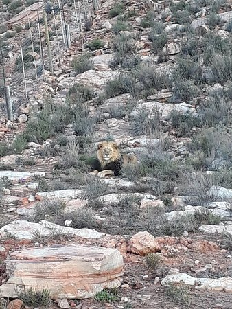 Touwsrivier, South Africa: 20180704_171342_large.jpg