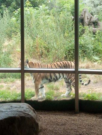 维也纳动物园照片