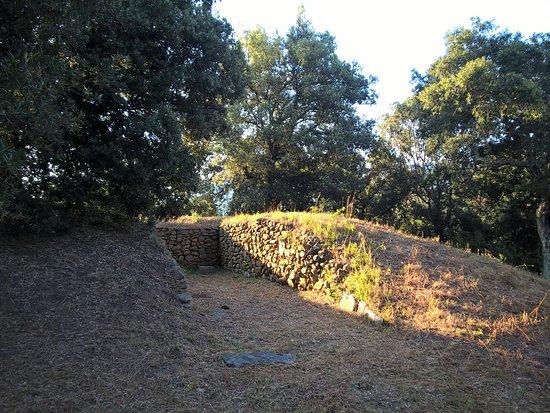 Area Archeologica Etrusca di Poggio Tondo照片